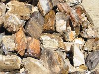Petrified Wood Rough